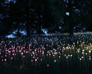 Houston Chronicle Checks Out British Artist Bruce Munro's Installation at Discovery Green