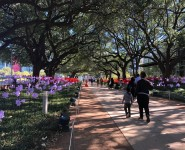 CultureMap on GUST: Eye-catching public art installation blows into Discovery Green this winter